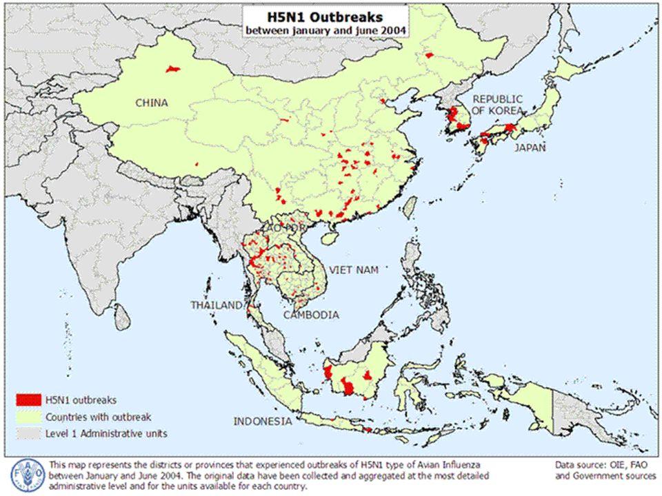 Brotes de H5N1 entre Enero y Junio del 2004