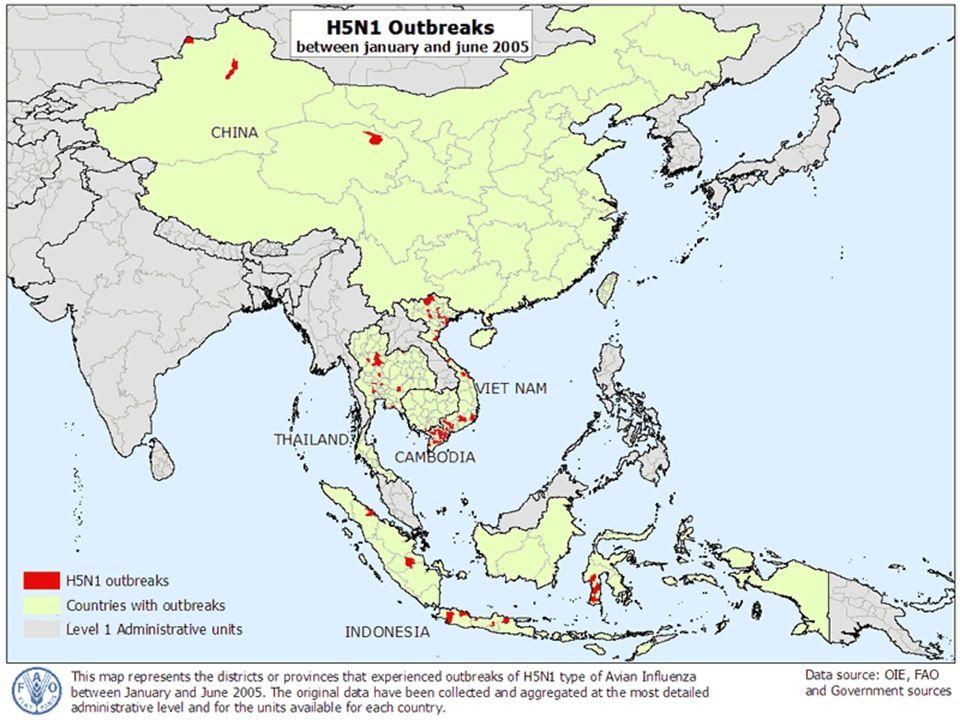 Brotes de H5N1 entre Enero y Junio del 2005