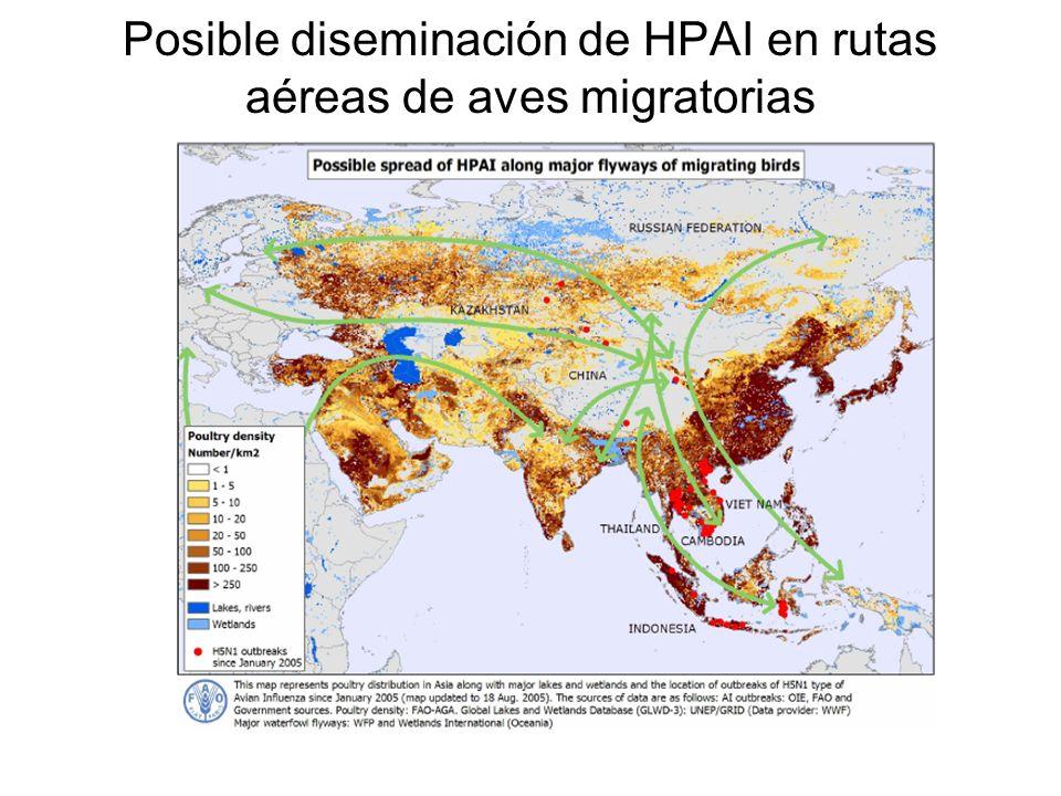 Posible diseminación de HPAI en rutas aéreas de aves migratorias
