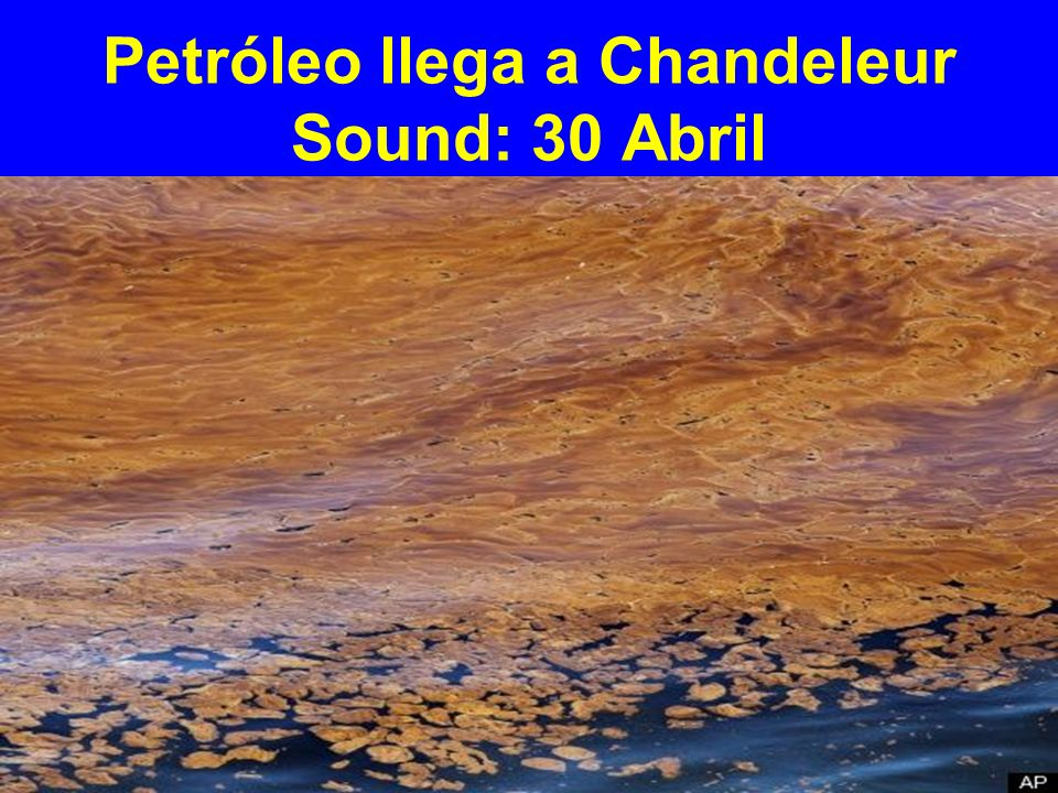 Petróleo llega a Chandeleur Sound: 30 Abril