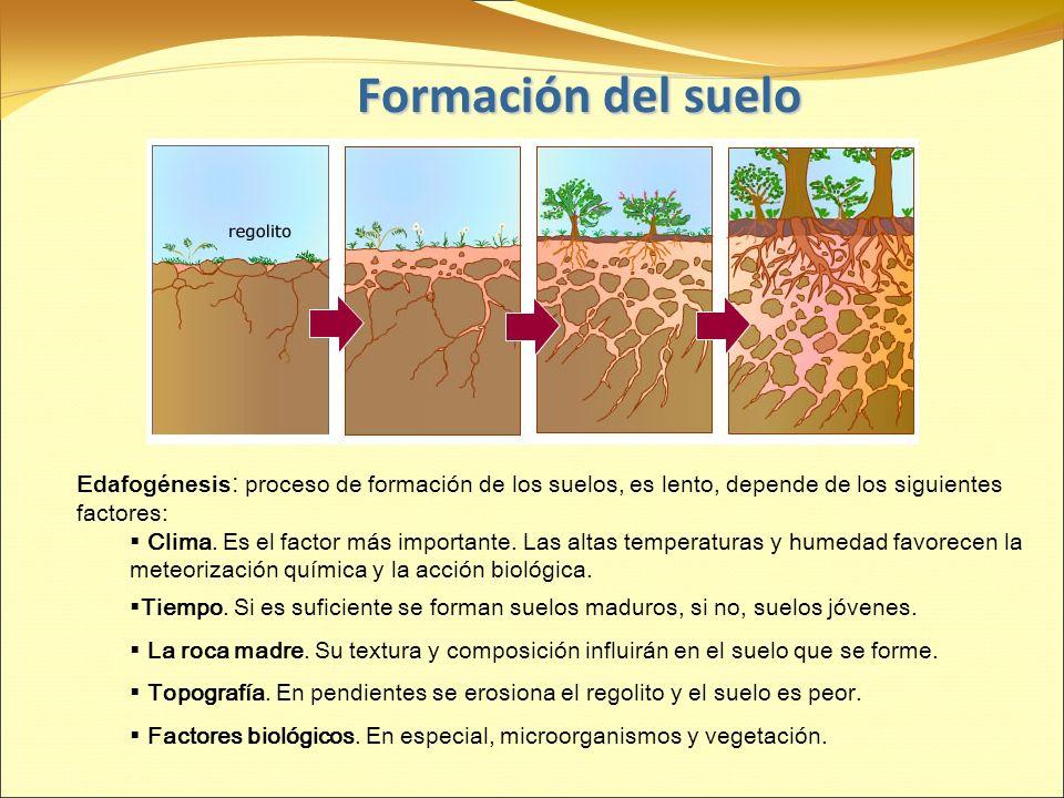 Geosfera ii el sustrato de la vida el suelo ppt video for Como se forma y desarrolla el suelo