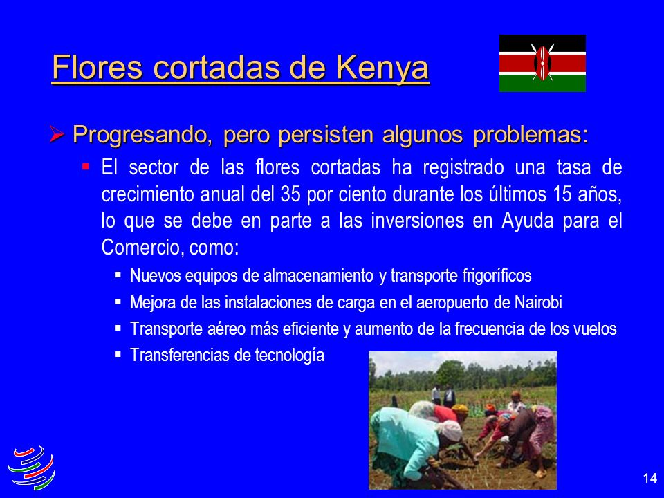 Flores cortadas de Kenya