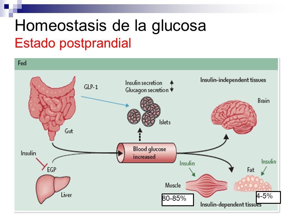 Diabetes Mellitus Fisiopatología - ppt video online descargar