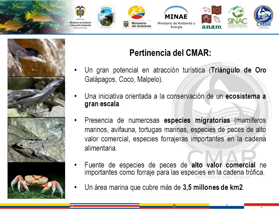 Pertinencia del CMAR:Un gran potencial en atracción turística (Triángulo de Oro Galápagos, Coco, Malpelo).