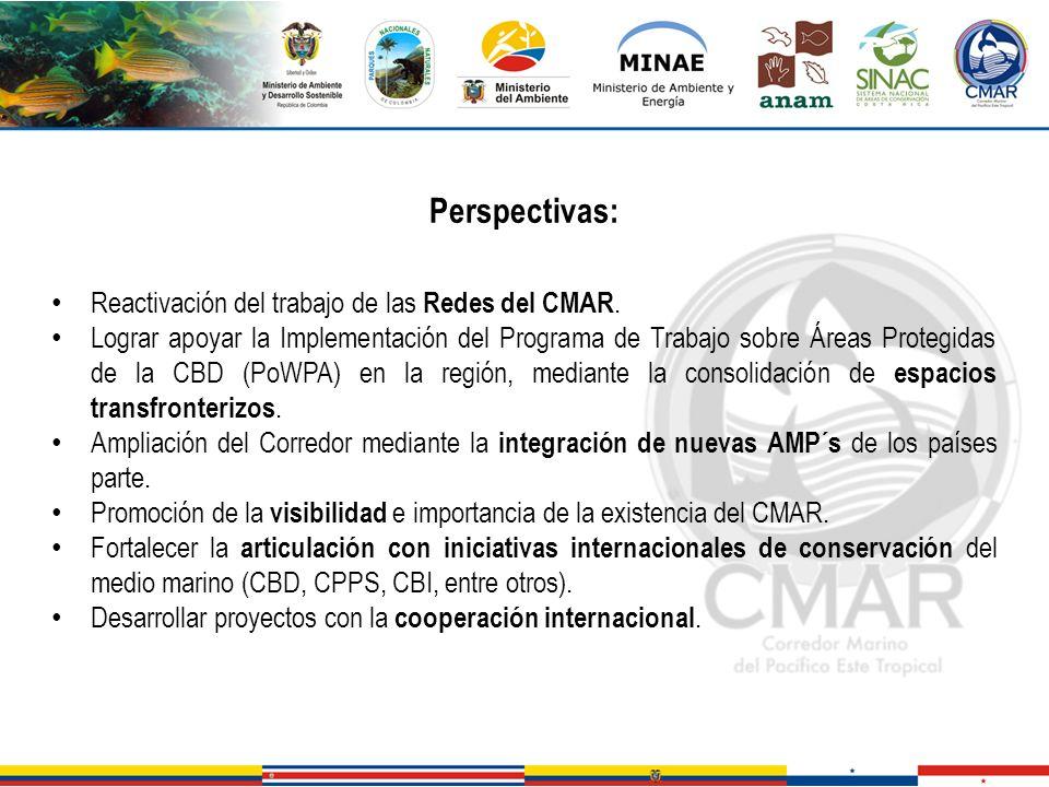 Perspectivas: Reactivación del trabajo de las Redes del CMAR.