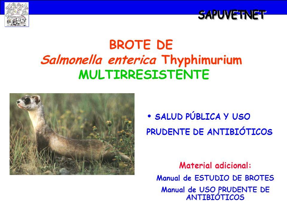 SAPUVETNET BROTE DE Salmonella enterica Thyphimurium MULTIRRESISTENTE