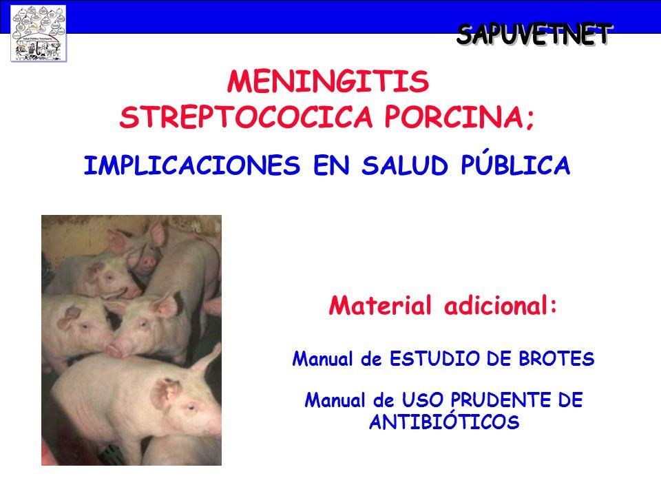 SAPUVETNET MENINGITIS STREPTOCOCICA PORCINA;