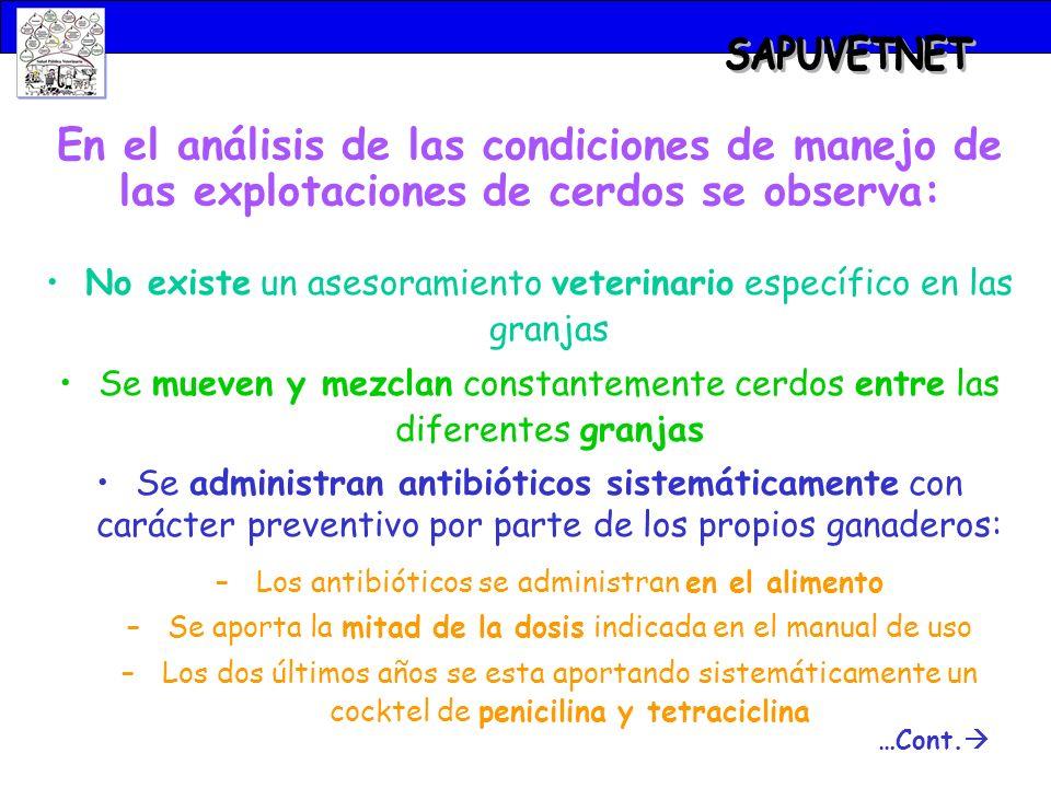 SAPUVETNET En el análisis de las condiciones de manejo de las explotaciones de cerdos se observa: