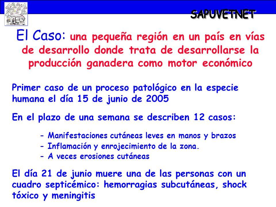 SAPUVETNET El Caso: una pequeña región en un país en vías de desarrollo donde trata de desarrollarse la producción ganadera como motor económico.