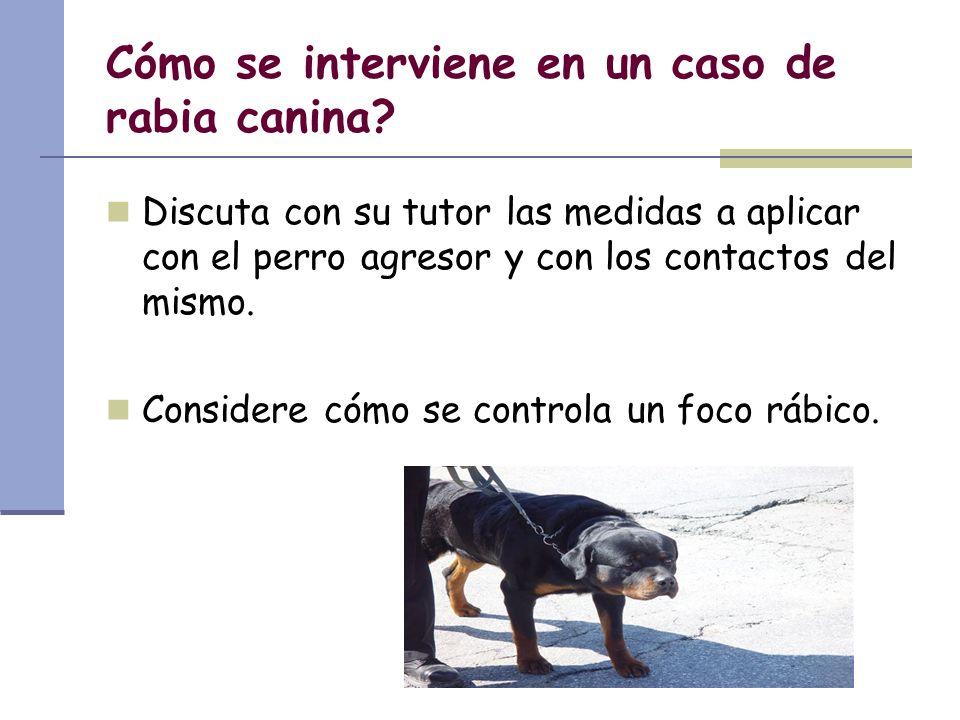 Cómo se interviene en un caso de rabia canina