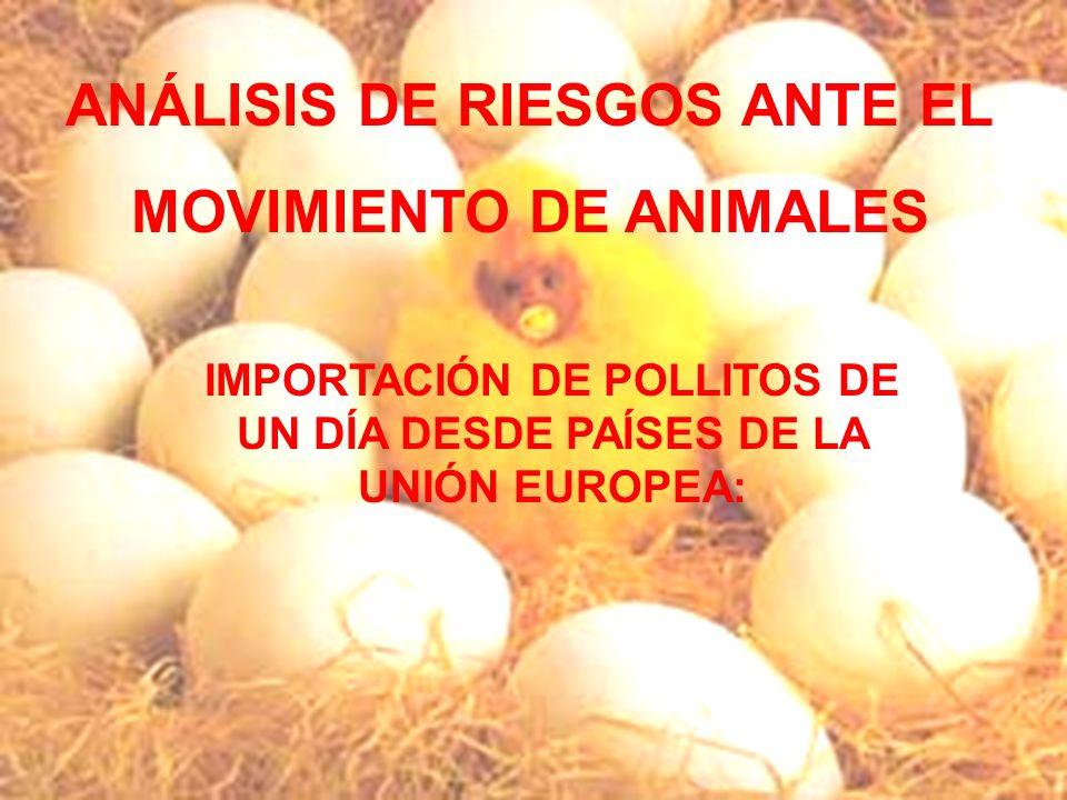 El Lince Ibérico ANÁLISIS DE RIESGOS ANTE EL MOVIMIENTO DE ANIMALES