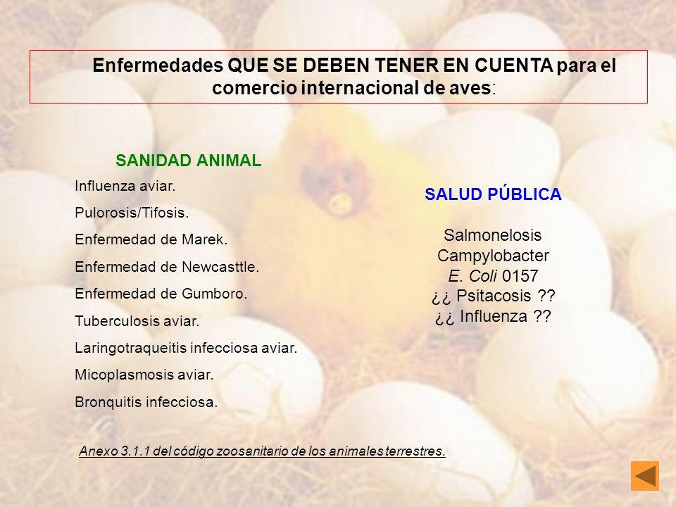 Enfermedades QUE SE DEBEN TENER EN CUENTA para el comercio internacional de aves: