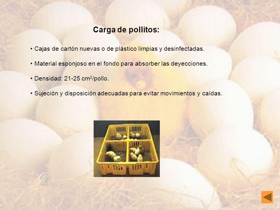 Carga de pollitos:Cajas de cartón nuevas o de plástico limpias y desinfectadas. Material esponjoso en el fondo para absorber las deyecciones.