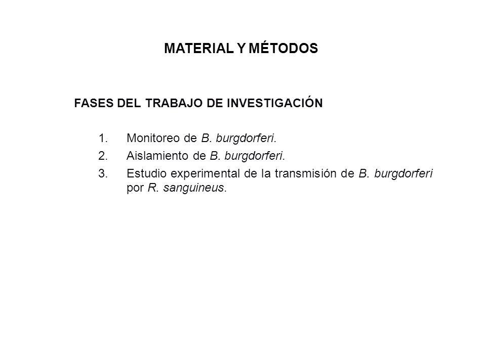 MATERIAL Y MÉTODOS FASES DEL TRABAJO DE INVESTIGACIÓN