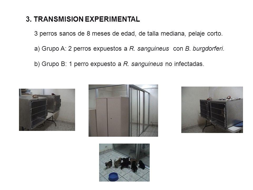 3. TRANSMISION EXPERIMENTAL