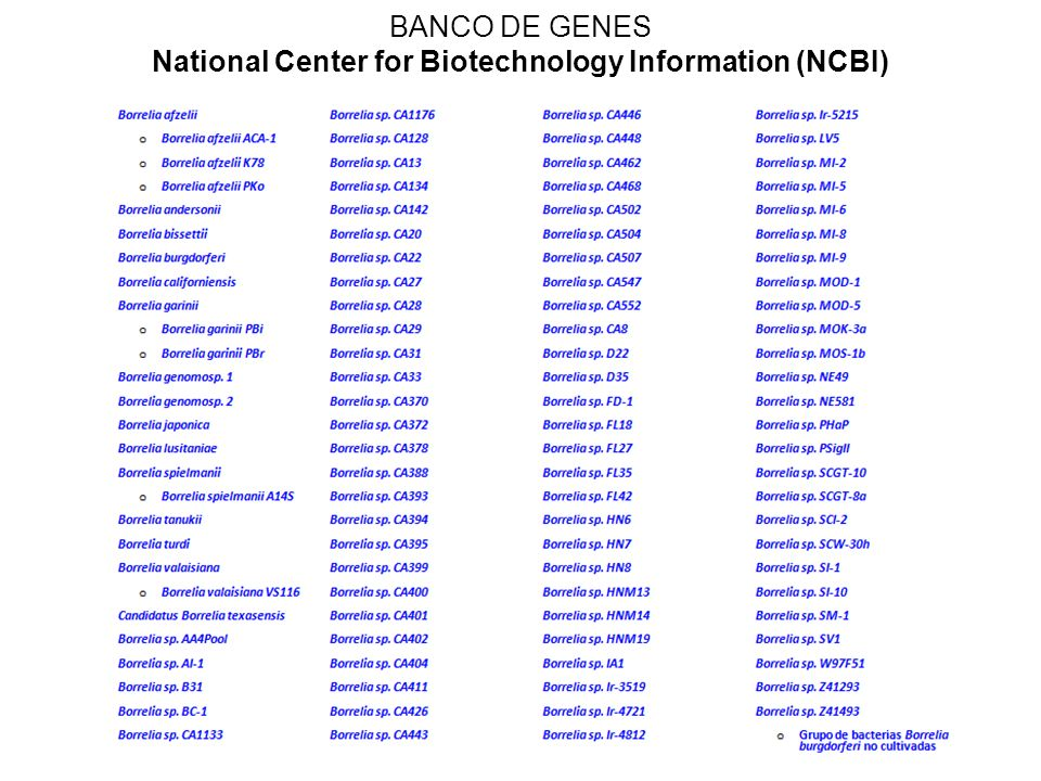 BANCO DE GENES National Center for Biotechnology Information (NCBI)