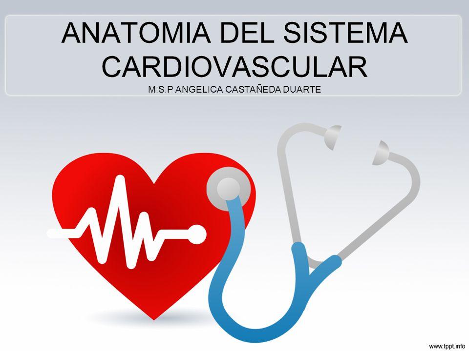 ANATOMIA DEL SISTEMA CARDIOVASCULAR M.S.P ANGELICA CASTAÑEDA DUARTE ...