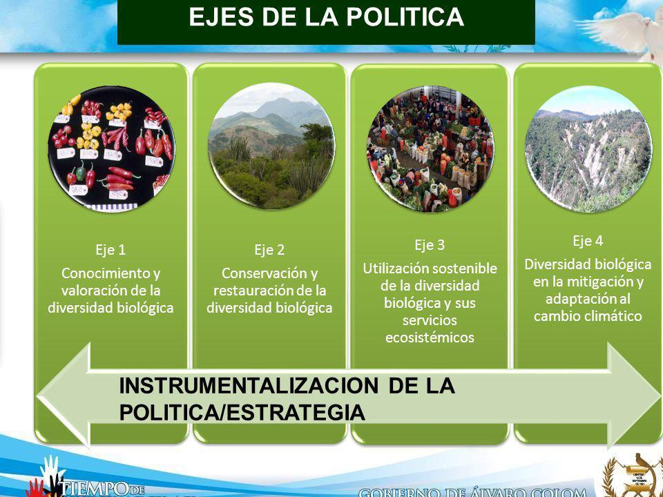 ENFOQUE DE LAS LÍNEAS DE POLÍTICA