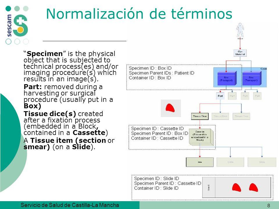 Normalización de términos