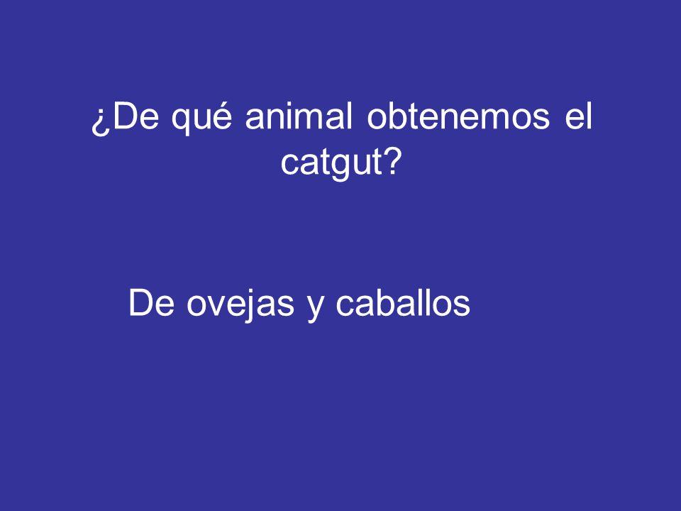 ¿De qué animal obtenemos el catgut