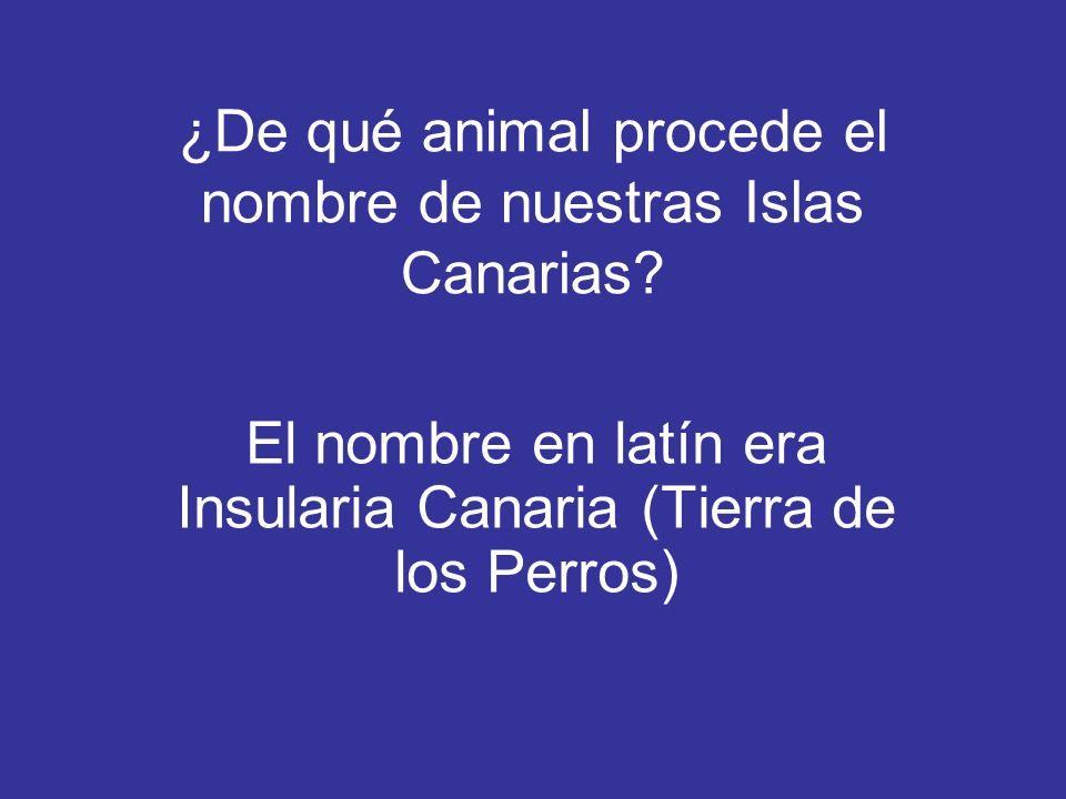 ¿De qué animal procede el nombre de nuestras Islas Canarias