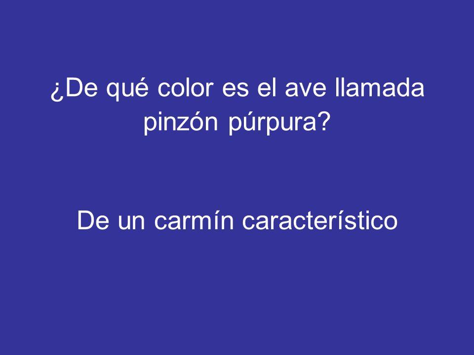 ¿De qué color es el ave llamada pinzón púrpura