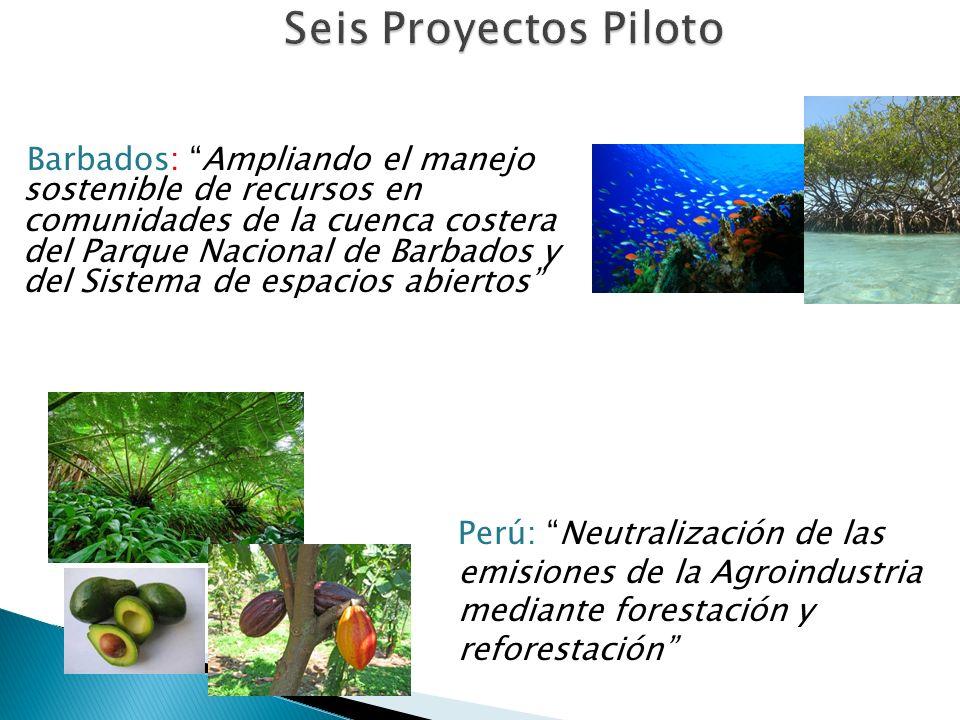 Seis Proyectos Piloto