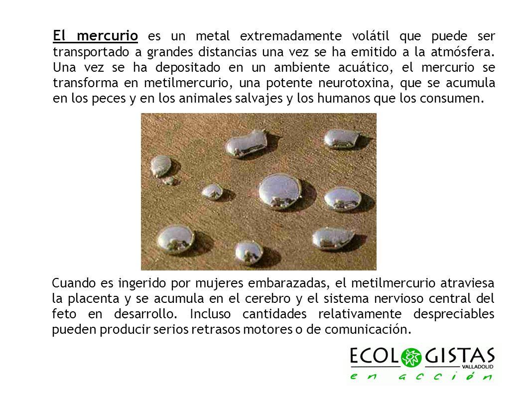 El mercurio es un metal extremadamente volátil que puede ser transportado a grandes distancias una vez se ha emitido a la atmósfera. Una vez se ha depositado en un ambiente acuático, el mercurio se transforma en metilmercurio, una potente neurotoxina, que se acumula en los peces y en los animales salvajes y los humanos que los consumen.