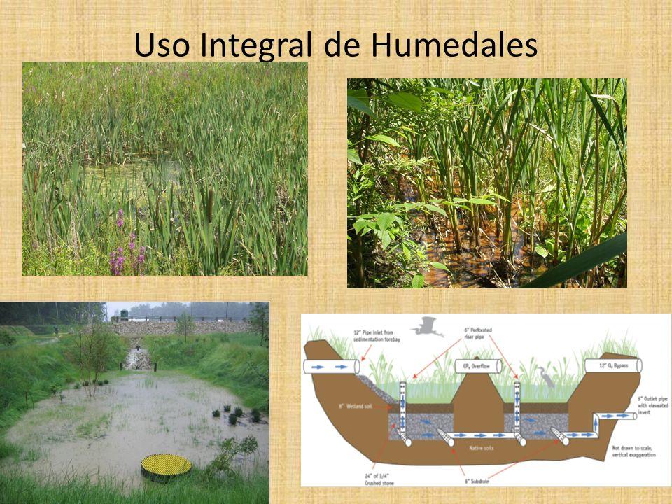 Uso Integral de Humedales
