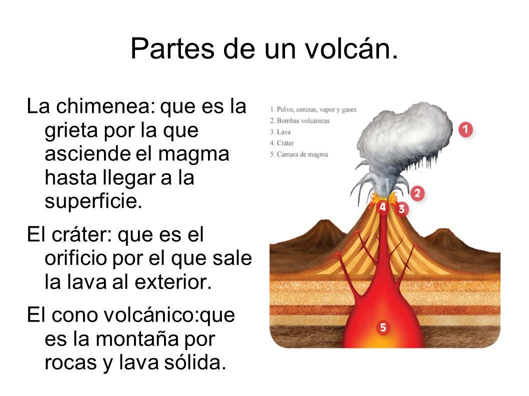 Los procesos internos el movimiento del aire en la for Partes de un vivero forestal