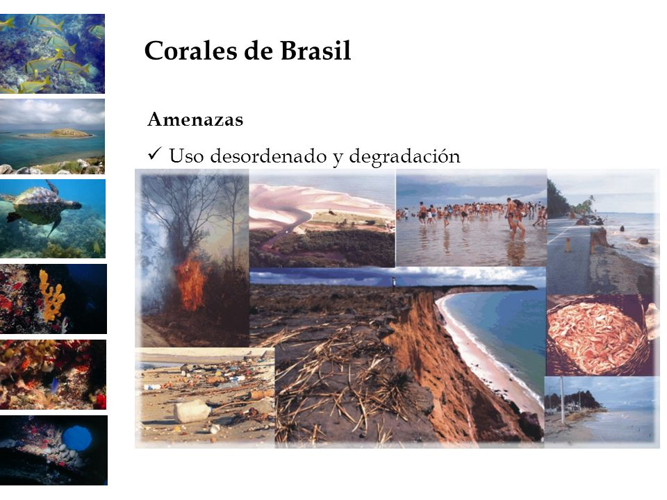 Corales de Brasil Amenazas Uso desordenado y degradación 22 22