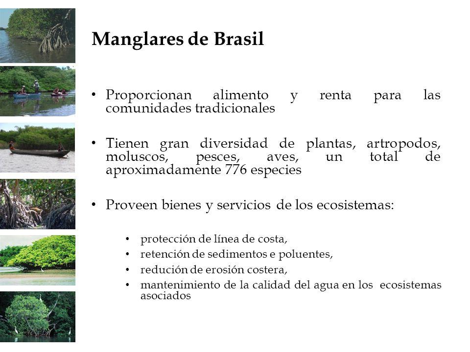 Manglares de BrasilProporcionan alimento y renta para las comunidades tradicionales.