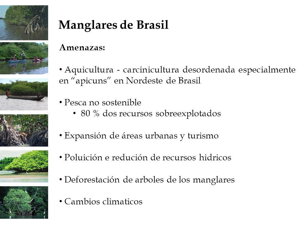 Manglares de Brasil Amenazas: