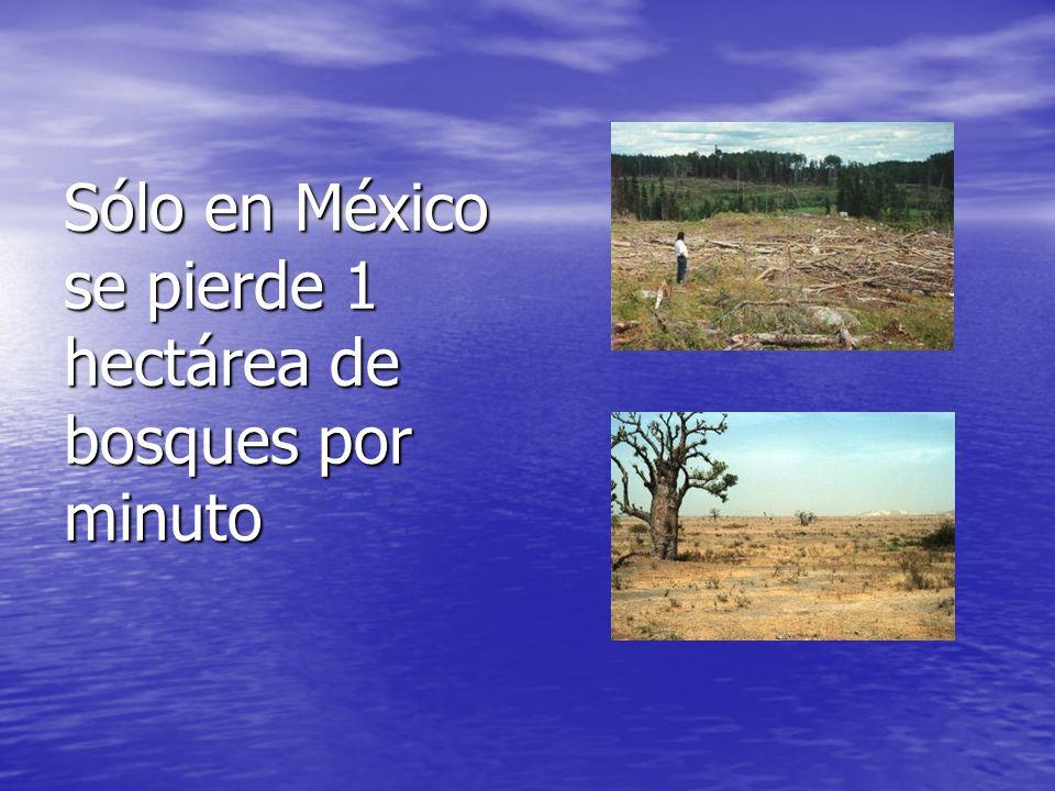 Sólo en México se pierde 1 hectárea de bosques por minuto