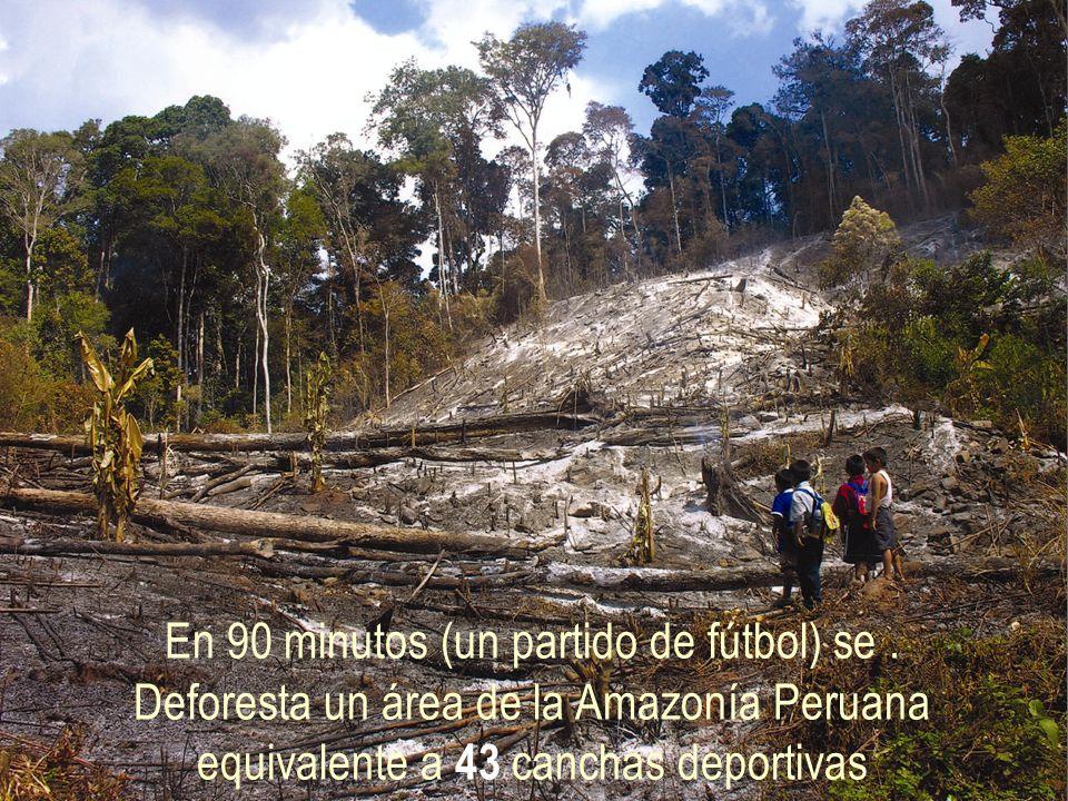 Entre el año 1990 y el 2000, se han deforestado cerca de un millón y medio de hectáreas de nuestra Amazonía, equivalentes al área que ocupa la Región Lambayeque