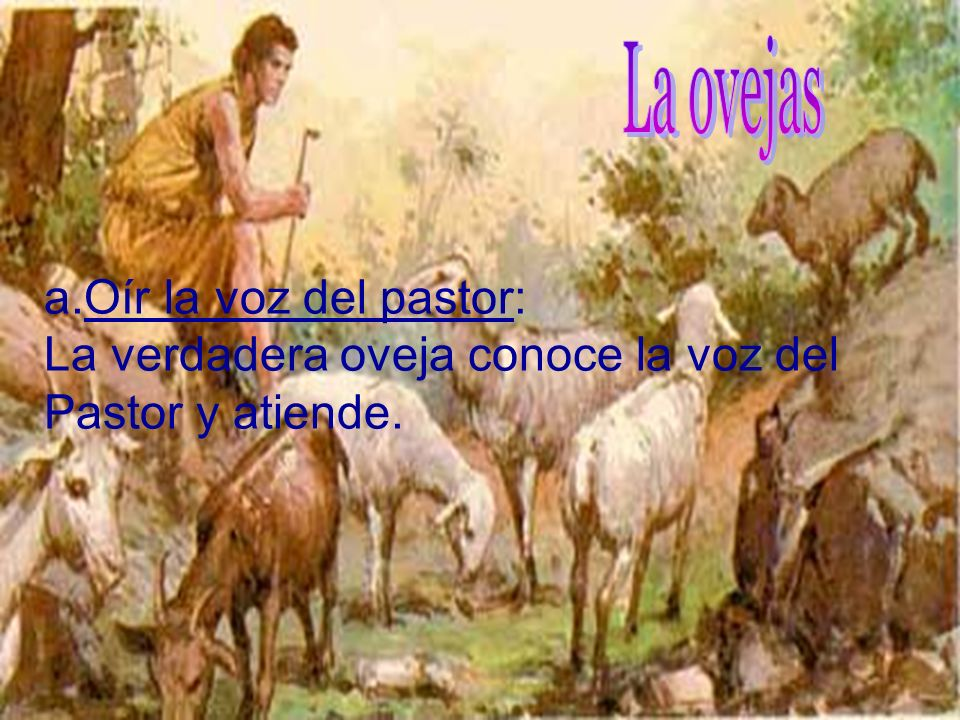 La ovejas Oír la voz del pastor: La verdadera oveja conoce la voz del Pastor y atiende.