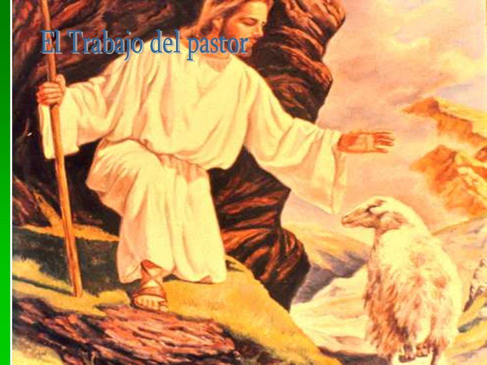 El Trabajo del pastor