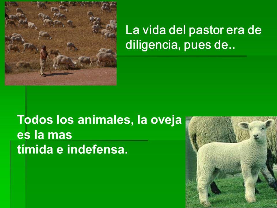 La vida del pastor era de diligencia, pues de..