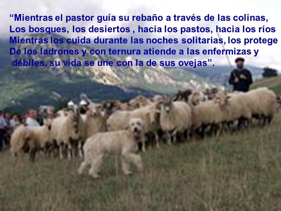 Mientras el pastor guía su rebaño a través de las colinas,