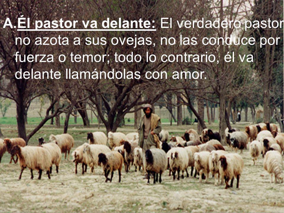 Él pastor va delante: El verdadero pastor