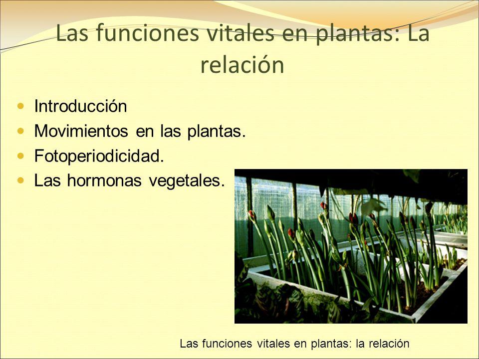 Las funciones vitales en plantas: La relación