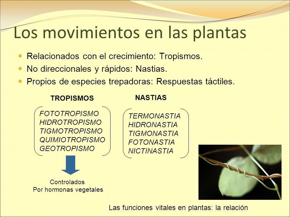 Los movimientos en las plantas