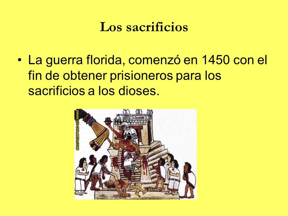 Los sacrificios La guerra florida, comenzó en 1450 con el fin de obtener prisioneros para los sacrificios a los dioses.