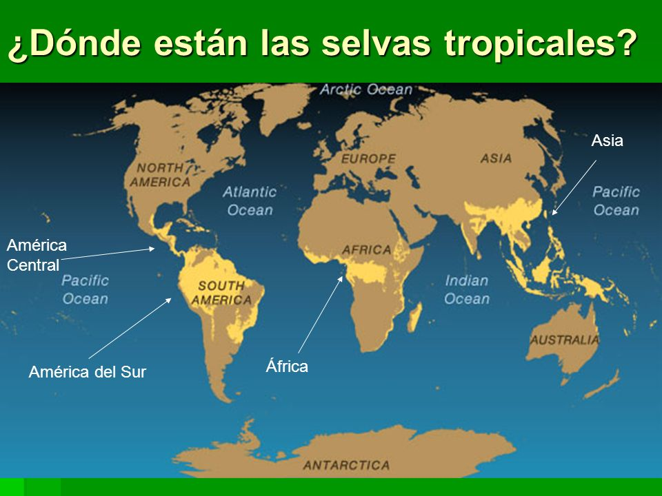 ¿Dónde están las selvas tropicales