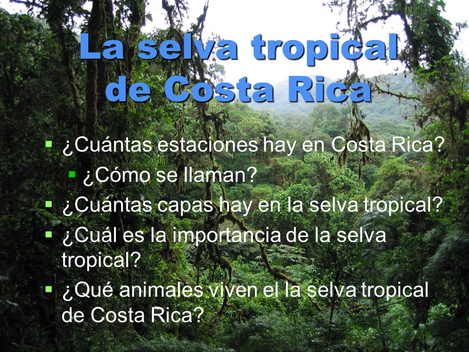 La selva tropical de Costa Rica