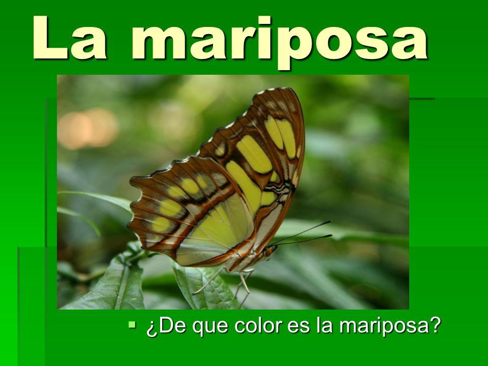 La mariposa ¿De que color es la mariposa