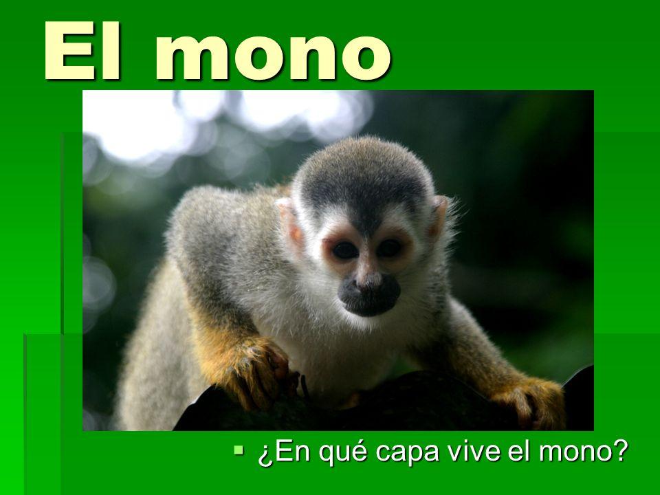 El mono ¿En qué capa vive el mono