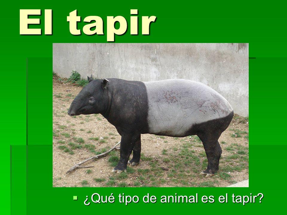 El tapir ¿Qué tipo de animal es el tapir