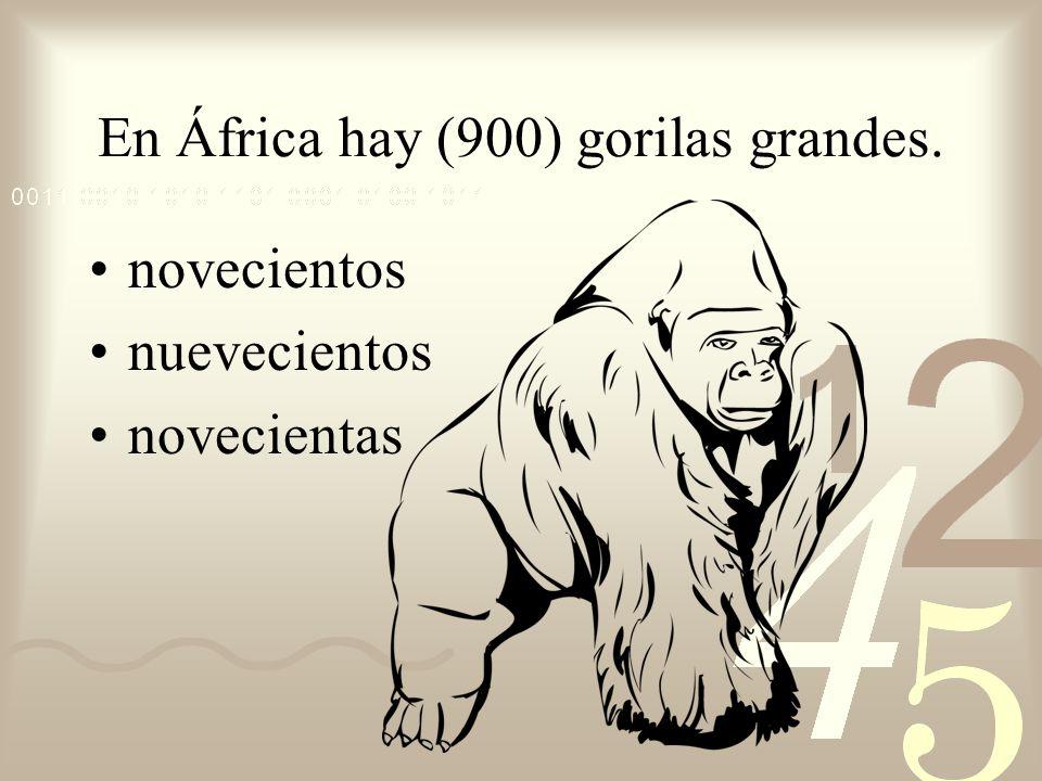 En África hay (900) gorilas grandes.