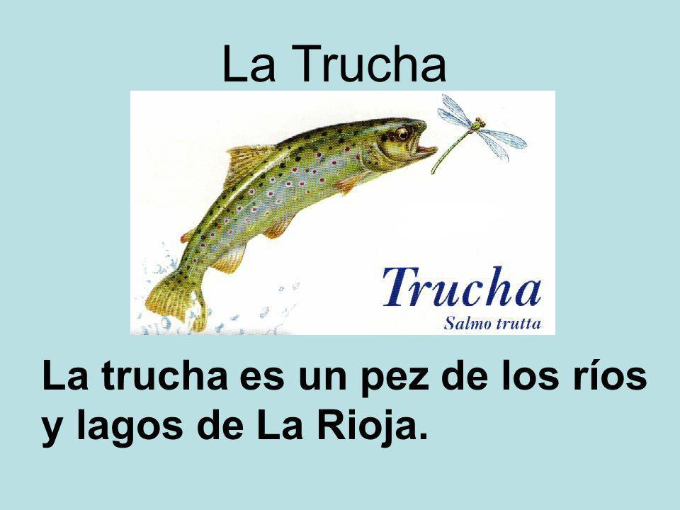 La Trucha La trucha es un pez de los ríos y lagos de La Rioja.